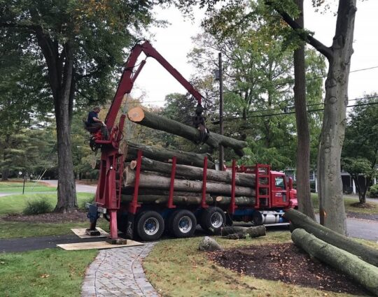 Commercial Tree Services-Lubbock Tree Trimming and Stump Grinding Services-We Offer Tree Trimming Services, Tree Removal, Tree Pruning, Tree Cutting, Residential and Commercial Tree Trimming Services, Storm Damage, Emergency Tree Removal, Land Clearing, Tree Companies, Tree Care Service, Stump Grinding, and we're the Best Tree Trimming Company Near You Guaranteed!