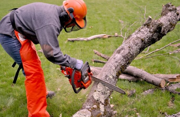 Emergency Tree Removal-Lubbock Tree Trimming and Stump Grinding Services-We Offer Tree Trimming Services, Tree Removal, Tree Pruning, Tree Cutting, Residential and Commercial Tree Trimming Services, Storm Damage, Emergency Tree Removal, Land Clearing, Tree Companies, Tree Care Service, Stump Grinding, and we're the Best Tree Trimming Company Near You Guaranteed!