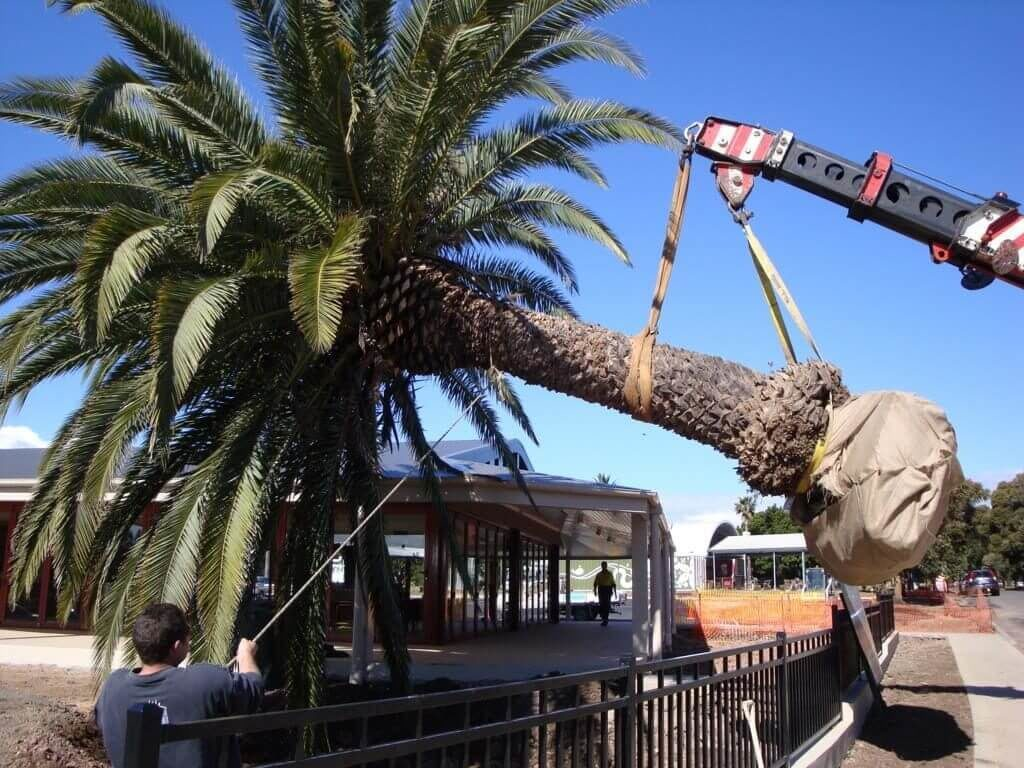 Palm Tree Trimming and Removal-Lubbock Tree Trimming and Stump Grinding Services-We Offer Tree Trimming Services, Tree Removal, Tree Pruning, Tree Cutting, Residential and Commercial Tree Trimming Services, Storm Damage, Emergency Tree Removal, Land Clearing, Tree Companies, Tree Care Service, Stump Grinding, and we're the Best Tree Trimming Company Near You Guaranteed!