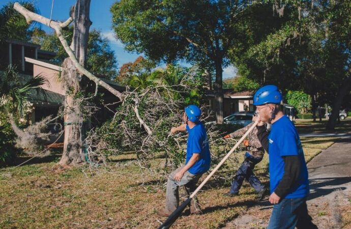 Residential Tree Services-Lubbock Tree Trimming and Stump Grinding Services-We Offer Tree Trimming Services, Tree Removal, Tree Pruning, Tree Cutting, Residential and Commercial Tree Trimming Services, Storm Damage, Emergency Tree Removal, Land Clearing, Tree Companies, Tree Care Service, Stump Grinding, and we're the Best Tree Trimming Company Near You Guaranteed!