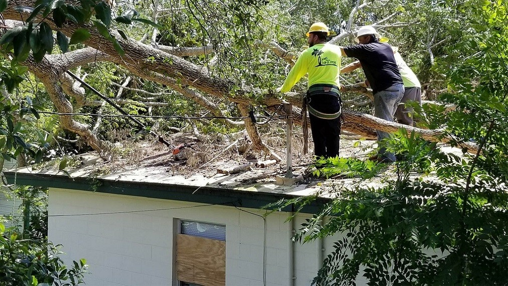Storm Damage-Lubbock Tree Trimming and Stump Grinding Services-We Offer Tree Trimming Services, Tree Removal, Tree Pruning, Tree Cutting, Residential and Commercial Tree Trimming Services, Storm Damage, Emergency Tree Removal, Land Clearing, Tree Companies, Tree Care Service, Stump Grinding, and we're the Best Tree Trimming Company Near You Guaranteed!