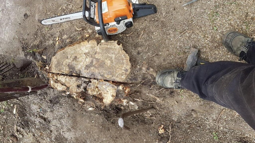 Stump Removal-Lubbock Tree Trimming and Stump Grinding Services-We Offer Tree Trimming Services, Tree Removal, Tree Pruning, Tree Cutting, Residential and Commercial Tree Trimming Services, Storm Damage, Emergency Tree Removal, Land Clearing, Tree Companies, Tree Care Service, Stump Grinding, and we're the Best Tree Trimming Company Near You Guaranteed!