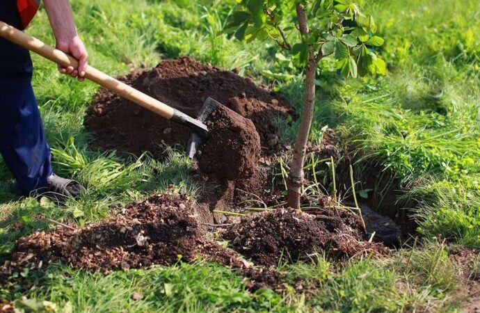Tree Planting-Lubbock Tree Trimming and Stump Grinding Services-We Offer Tree Trimming Services, Tree Removal, Tree Pruning, Tree Cutting, Residential and Commercial Tree Trimming Services, Storm Damage, Emergency Tree Removal, Land Clearing, Tree Companies, Tree Care Service, Stump Grinding, and we're the Best Tree Trimming Company Near You Guaranteed!