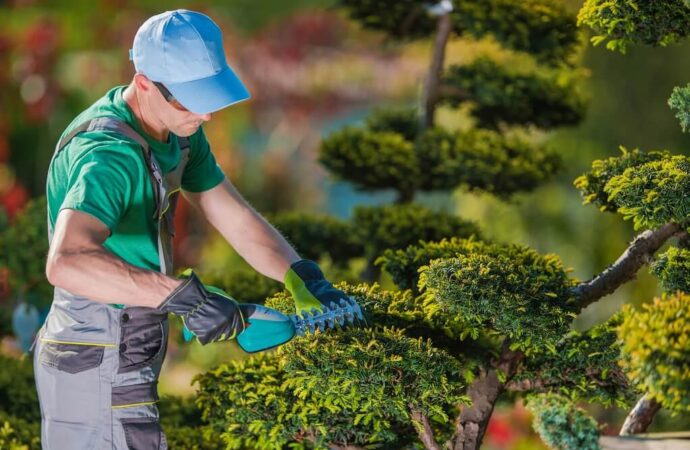 Tree Pruning-Lubbock Tree Trimming and Stump Grinding Services-We Offer Tree Trimming Services, Tree Removal, Tree Pruning, Tree Cutting, Residential and Commercial Tree Trimming Services, Storm Damage, Emergency Tree Removal, Land Clearing, Tree Companies, Tree Care Service, Stump Grinding, and we're the Best Tree Trimming Company Near You Guaranteed!