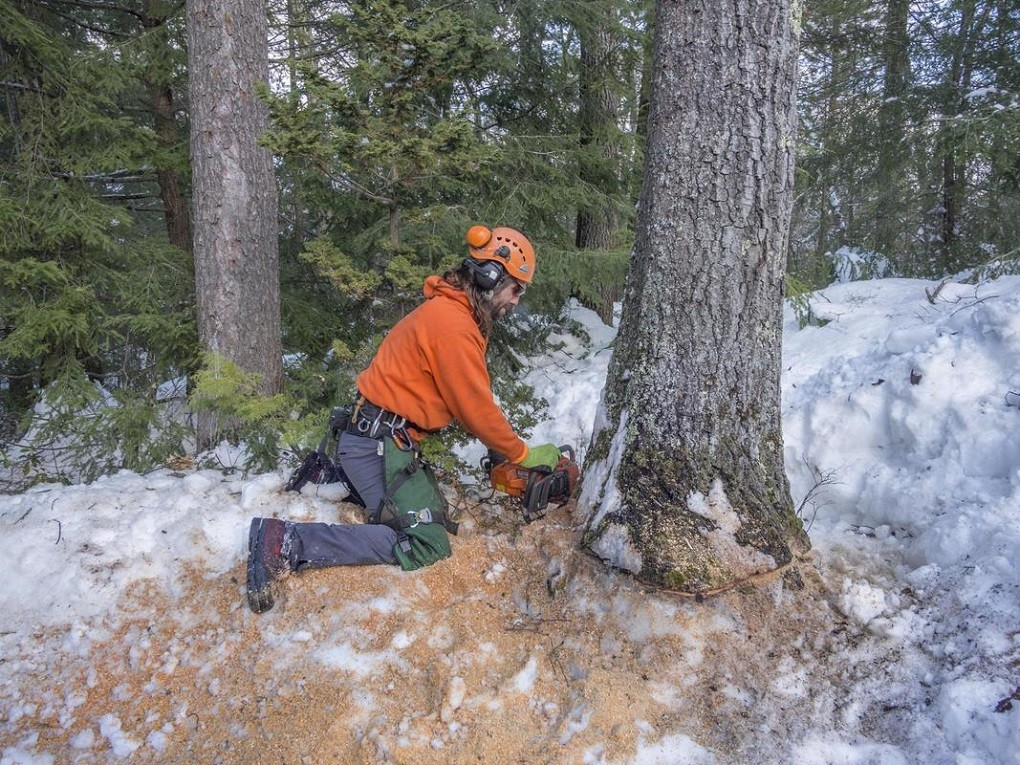 Tree Removal-Lubbock Tree Trimming and Stump Grinding Services-We Offer Tree Trimming Services, Tree Removal, Tree Pruning, Tree Cutting, Residential and Commercial Tree Trimming Services, Storm Damage, Emergency Tree Removal, Land Clearing, Tree Companies, Tree Care Service, Stump Grinding, and we're the Best Tree Trimming Company Near You Guaranteed!