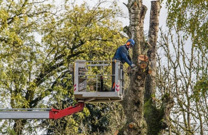 Tree Trimming-Lubbock Tree Trimming and Stump Grinding Services-We Offer Tree Trimming Services, Tree Removal, Tree Pruning, Tree Cutting, Residential and Commercial Tree Trimming Services, Storm Damage, Emergency Tree Removal, Land Clearing, Tree Companies, Tree Care Service, Stump Grinding, and we're the Best Tree Trimming Company Near You Guaranteed!