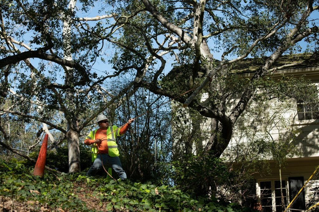 Shallowater-Lubbock Tree Trimming and Stump Grinding Services-We Offer Tree Trimming Services, Tree Removal, Tree Pruning, Tree Cutting, Residential and Commercial Tree Trimming Services, Storm Damage, Emergency Tree Removal, Land Clearing, Tree Companies, Tree Care Service, Stump Grinding, and we're the Best Tree Trimming Company Near You Guaranteed!