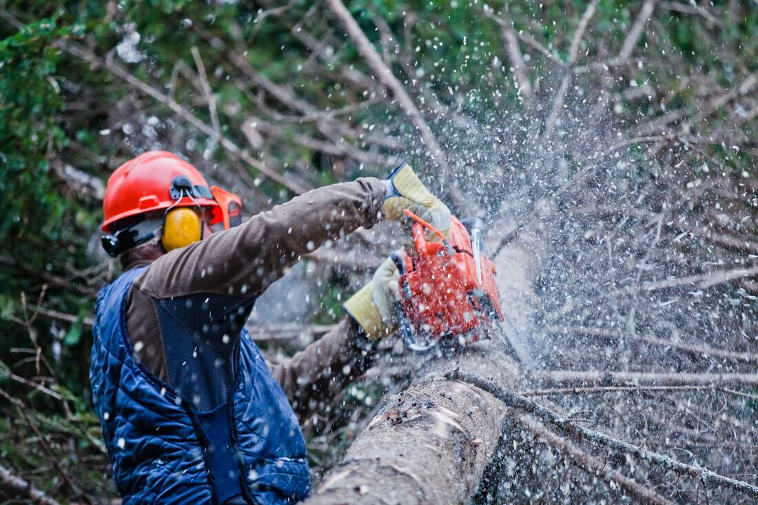 Wolfforth-Lubbock Tree Trimming and Stump Grinding Services-We Offer Tree Trimming Services, Tree Removal, Tree Pruning, Tree Cutting, Residential and Commercial Tree Trimming Services, Storm Damage, Emergency Tree Removal, Land Clearing, Tree Companies, Tree Care Service, Stump Grinding, and we're the Best Tree Trimming Company Near You Guaranteed!